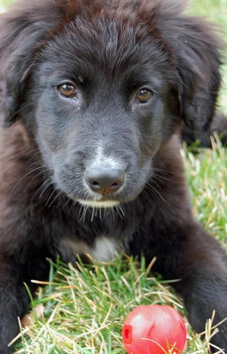 Border collie & lab mix - may have changed my mind on what kind of dog I want :)