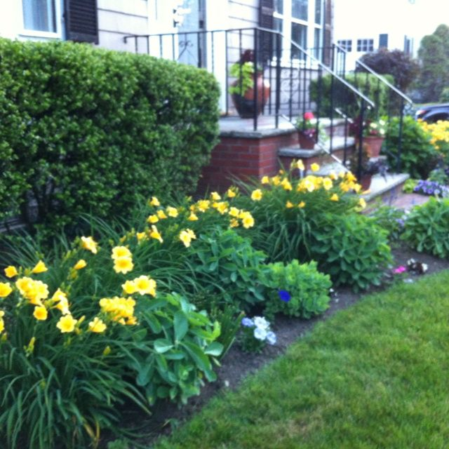 Garden Ideas Landscape Plans For Front Of House: Gardens Ideas, Zastosowania Liliowców, Yellow Daylily