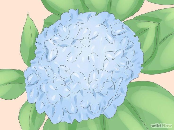 Grow Hydrangeas Step 1.jpg