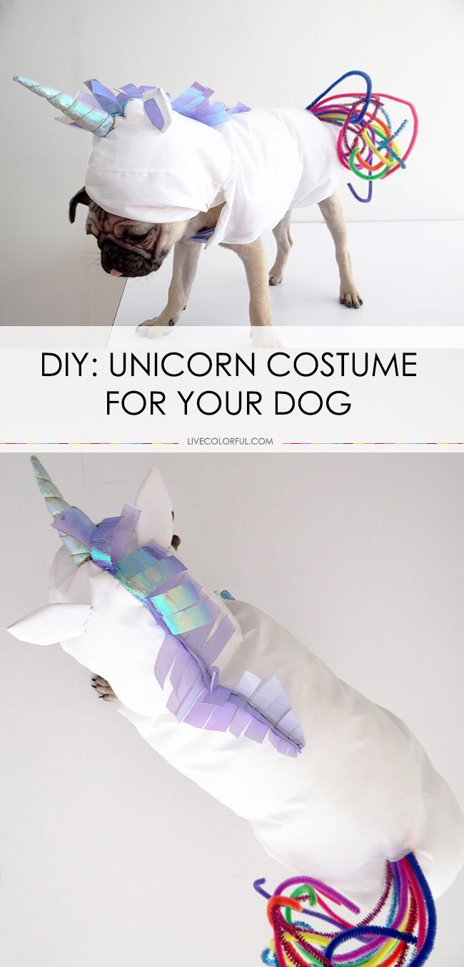 Make a ridiculously adorable unicorn costume for your dog this Halloween | LiveColorful.com