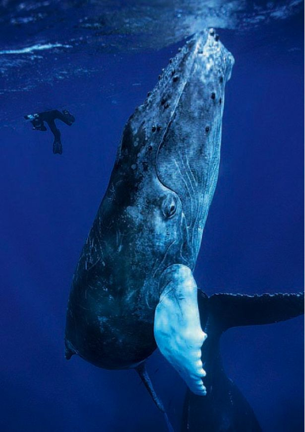 I want to swim with a whale. That would make my life complete (used to think dolphin, now I'm thinking bigger)!!!! What a thril...