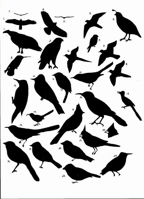 Bird printables for all the DIY wall decor