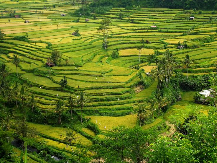 17 best images about rice paddies in bali on pinterest for Terrace ubud bali