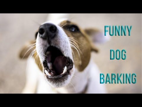 What are some facts about dog barking?