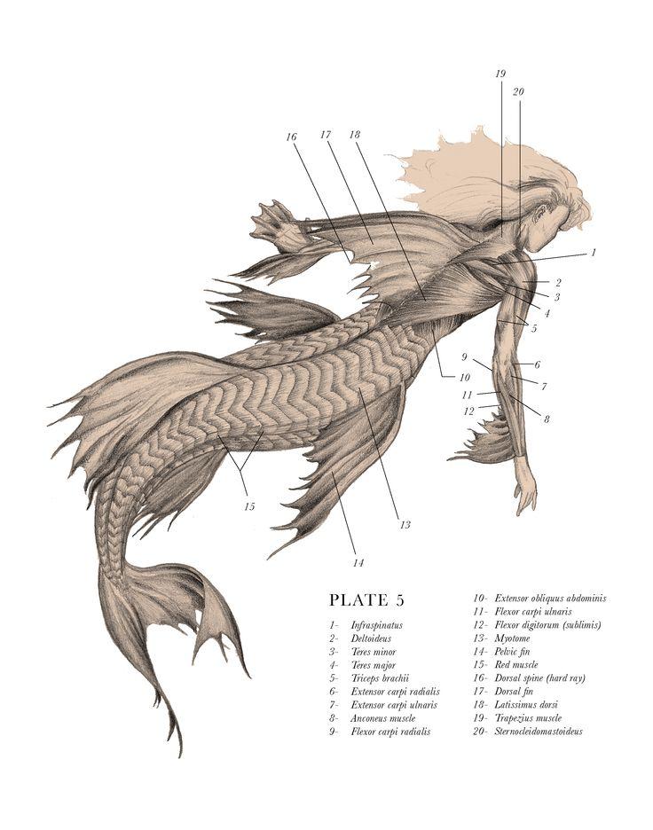 36 best Prehistoric Mammals & Cryptozoology images on Pinterest ...