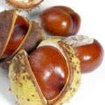 Horse Chestnut Seed Extract Review - http://www.healtharticles101.com/horse-chestnut-seed-extract-review/#more-6161