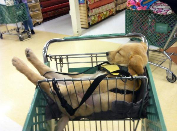 """""""Muitas compras! Exausto..."""""""