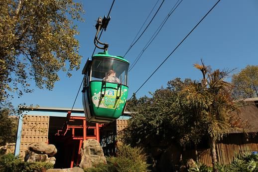 Take the kids in the cable car up the hill to see the lions, tiger, and other animals - Pretoria Zoo, Central Pretroria. Photo: Réan Coetzee