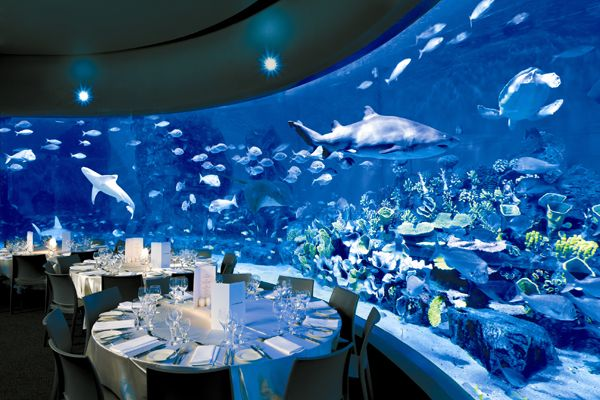 Melbourne Aquarium is a premiere wedding venue boasting five stunning and unique spaces including stunning Antarctica and The Fish Bowl.