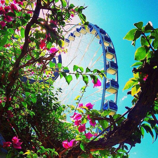 The Wheel of Brisbane, Brisbane #Australia    by matthewtaylorthomas (instagram) Mmm the colours are just beautiful.