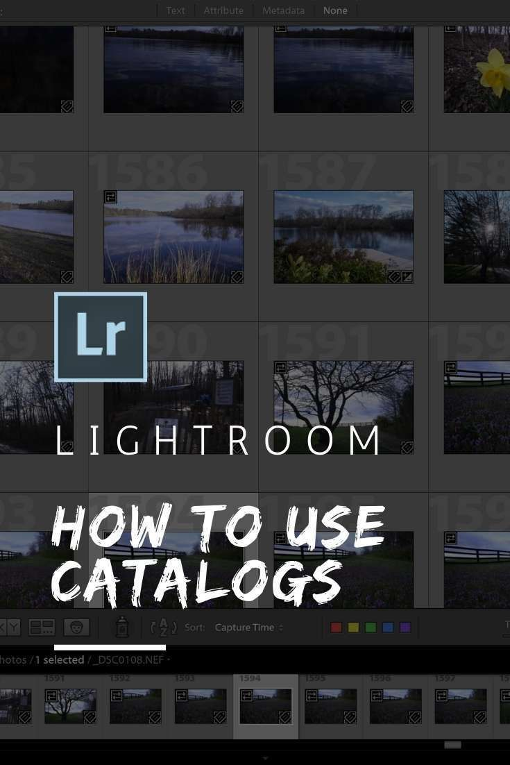 What is a catalog in lightroom