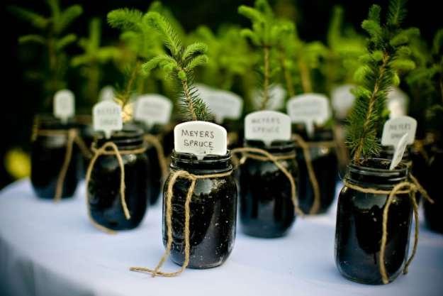 tree seedling wedding favors