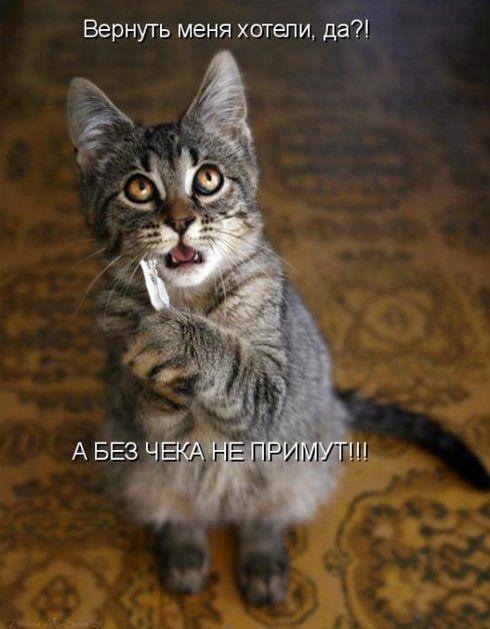 Смешные картинки про животных с надписями