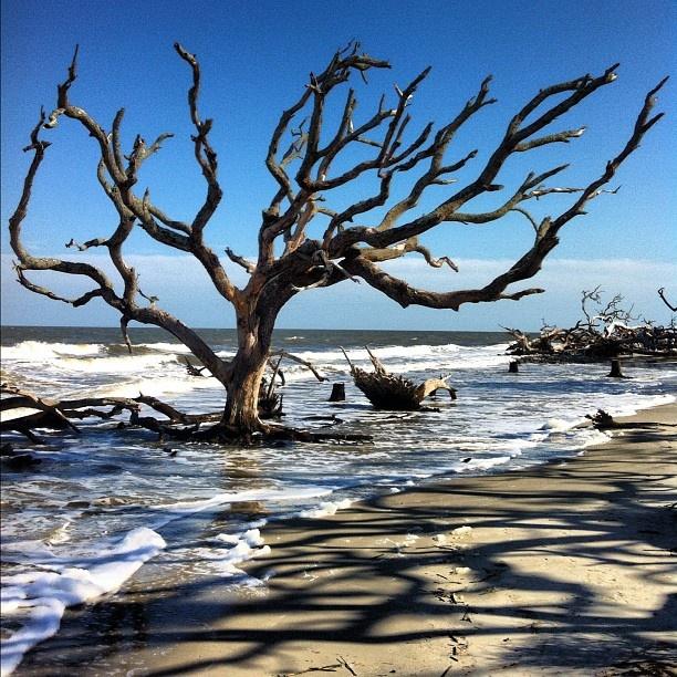Deadwood Beach Jekyll Island Georgia Purposeofenvy Webstagram