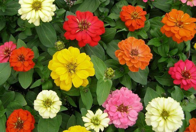 Espécies de Plantas que Florescem Todo o Ano | Flores - Cultura Mix