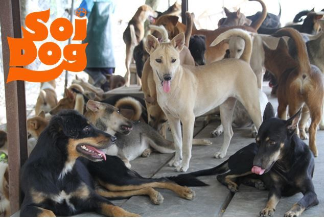 Soi Dog Foundation - A crisis looming for dogs rescued from the illegal dog meat trade... have lots of dogs for adoption, and can ship to the UK/US/Canada....wonderful group with over 2000 dogs for adoption