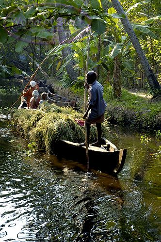 People Transporting Grass In Canoe On The Backwaters Kerala South India
