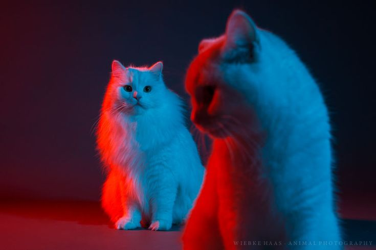 Award Winning Animal Photographer's Cat Gallery Is Full Of Character And Color Crazy Cat Lady, Crazy Cats, Cute Baby Sloths, Three Cats, Cat Pose, Horse Portrait, Horse Girl, Equine Photography, Bored Panda