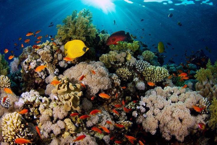 Большой Барьерный риф. Австралия. Красивые фото