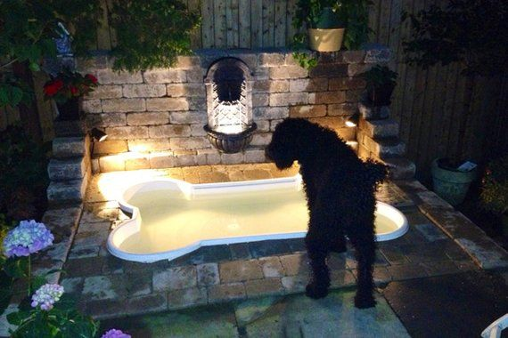 Building a Dog Run | Dog-Friendly Landscaping | Landscaping Tips. Click on link http://www.houselogic.com/photos/outdoors/building-dog-run/slide/ramp-up-a-wood-deck/#make-a-splash