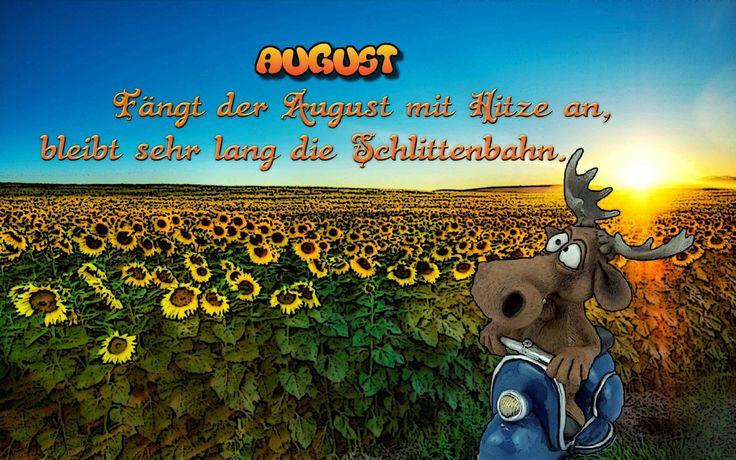 """""""Fängt der August mit Hitze an, bleibt sehr lang die Schlittenbahn.""""  #kalender #august #regenbogen-elch #zitat #sprüche sheep-black.com - Highlights"""