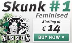 Buy Skunk Seeds