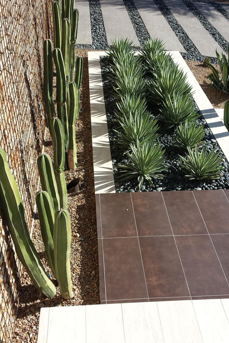 The yucca plants in this yard have their own planter box to make the spaces for each type of plants defined. Behind the yucca, there are cacti lining the gabion wall. Each of these species of plant are drought resistant, so they will not need much water in the coming summer heat.