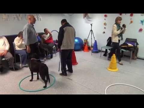 Terapia asistida con animales - YouTube