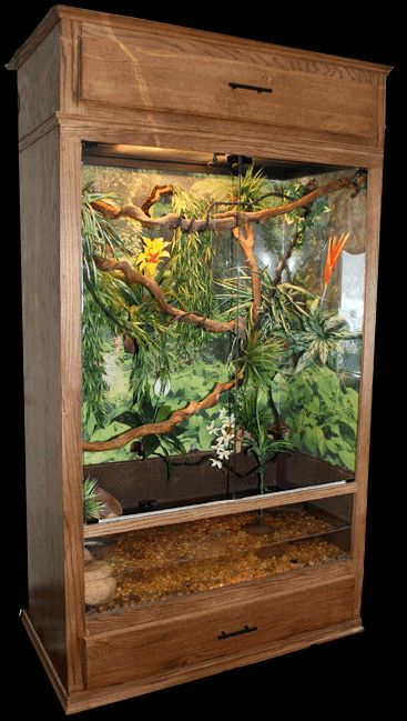 reptile terrariums - Google Search