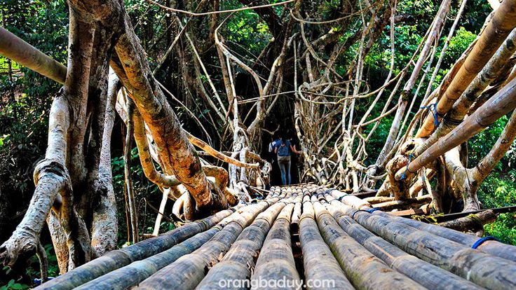 Seumur Jembatan Akar Baduy hanya ada di tempat orang-orang yang tidak memakai alas kaki, tidak menggunakan sabun dan shampo, menenun pakaiannya sendiri, tidak memaku diantara kayu rumahnya, tidak...
