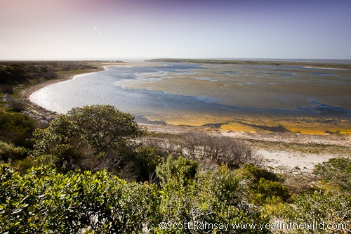 De Hoop vlei is fed by two rivers, but although it is only a few kilometres from the sea, there is no outlet for the vlei. In fact, in times of drought, the vlei can dry up completely. BelAfrique your personal travel planner - www.BelAfrique.com