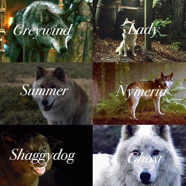 The Stark's Direwolves