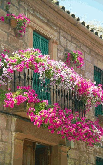 Balcony garden.  **Looks like all petunias in various pink shades and maybe some white. **