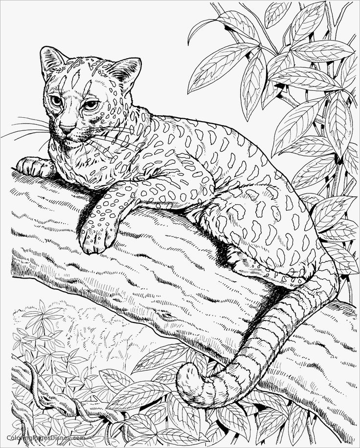Realistic Cheetah Coloring Page | Cat coloring page ...