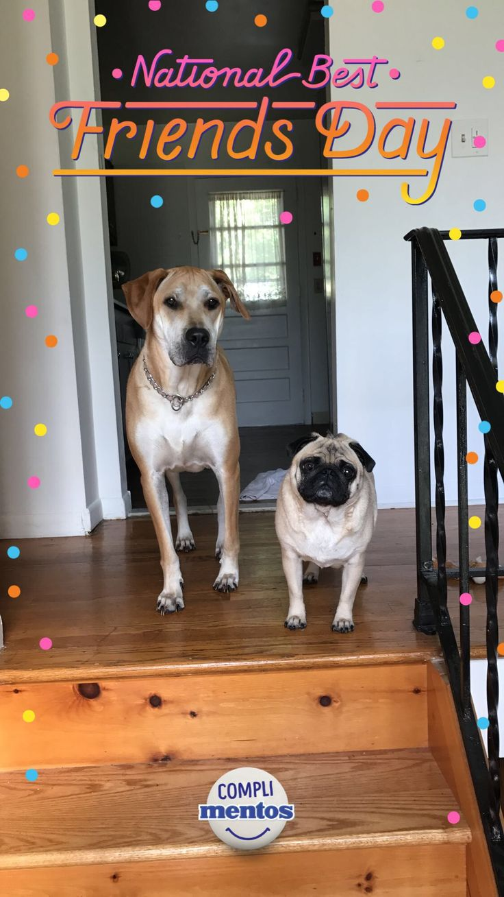 Happy National Best Friend Day from Remi & Nacho! http://ift.tt/2s17vfO