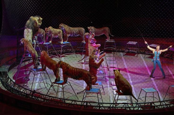 New York City Council Votes to Ban Wild Animal Performances from Circuses -  The prohibition will take effect at the end of 2018.  http://www.nydailynews.com/new-york/city-council-voted-ban-wild-animal-acts-circuses-article-1.3266675