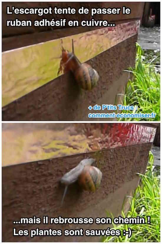 Marre que les escargots et les limaces mangent vos fleurs et votre potager ? C'est vrai que c'est pas marrant de voir ses légumes et plantes se faire manger... Mais pas besoin d'acheter des produits chimiques mauvais pour vos légumes et votre santé !  Découvrez l'astuce ici : http://www.comment-economiser.fr/repulsif-naturel-que-les-escargots-detestent.html?utm_content=buffer2a0c9&utm_medium=social&utm_source=pinterest.com&utm_campaign=buffer