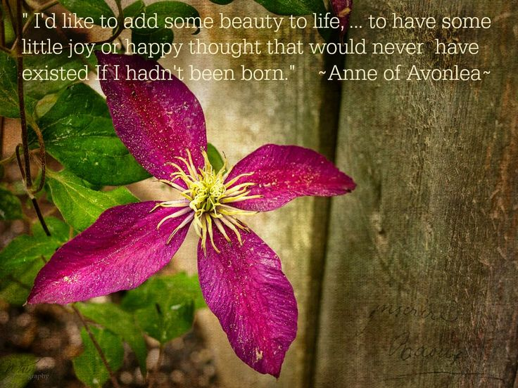 http://www.alifeofwhimsey.com Anne of Avonlea quote