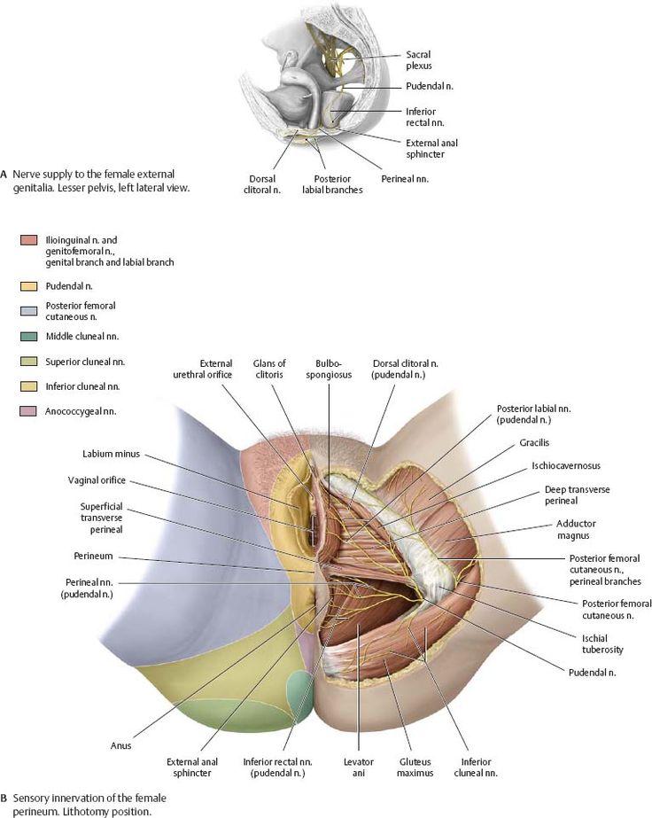 12 mejores imágenes de private en Pinterest | Anatomía médica ...