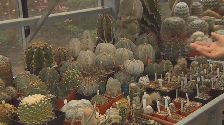 Mijn tuin - In deze aflevering van 'mijn tuin' leren we de wondere wereld van cactussen en vetplanten kennen.