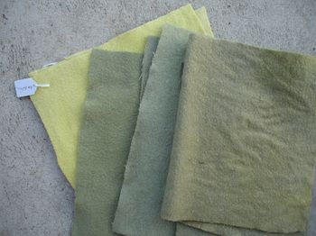 Dyeing with dandelion (with and without iron)