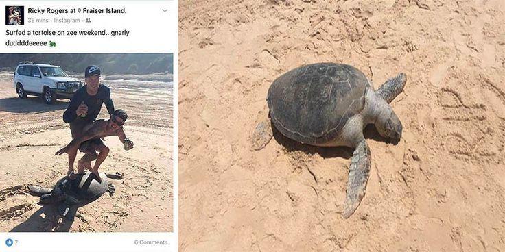 Общество по защите животных в штате Квинсленд (Австралия) погрузилось в полнейший шок, когда обнаружило пост двух молодых парней, стоящих на панцире черепахи. «Эти парни просто полные идиоты &…