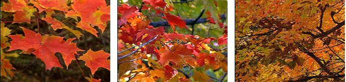 New York Fall Foliage: Autumn in The Adirondack Park in Upstate New York: Adirondack Fall Foliage Leaves update in Lake Placid, Saranac Lake, Tupper Lake, Malone, Glens Falls, Old Forge, Lake George etc..