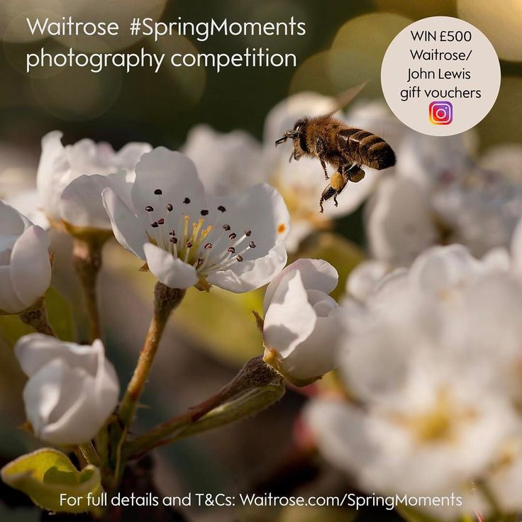 Win £500 Waitrose gift vouchers in our #SpringMoments photography competition!  Spring is a time of wonderful moments: the first flowering plants and blossoms, British seasonal produce and longer and lighter evenings.  For your chance to win £500 vouchers and have your photo feature in our Waitrose Weekend magazine, share a photo on Instagram that means Spring to you using #SpringMoments and @Waitrose.  For full details about how to take part and T&Cs, click the link in our bio or visit…