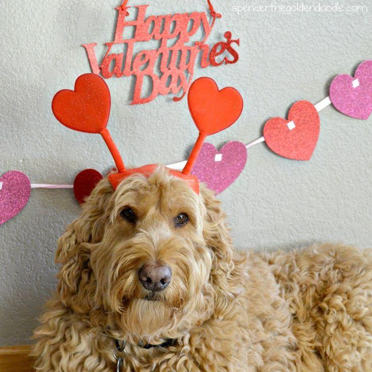 Image result for golden doodle valentine Doodles