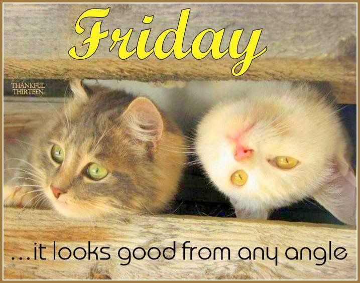 Friday Quotes Pinterest Humor: 248 Best Images About TGIF On Pinterest