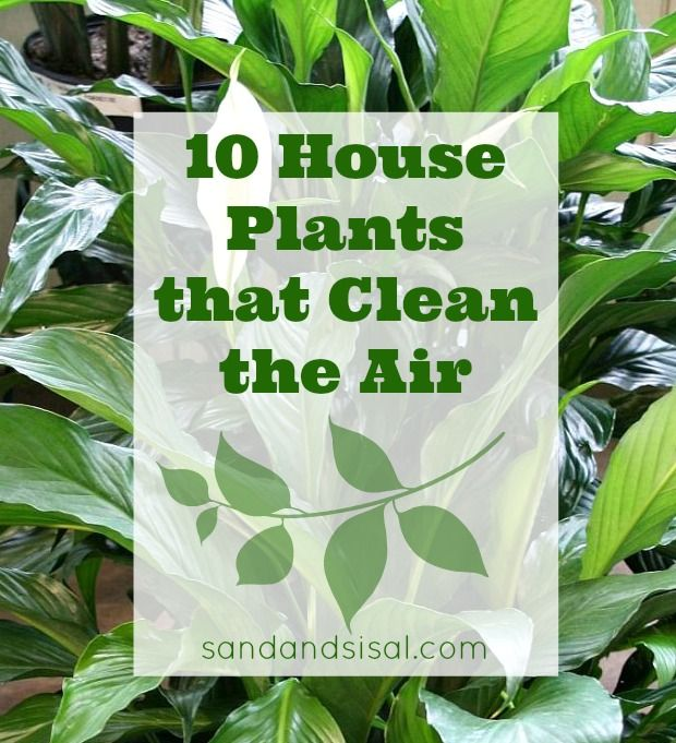 10 House Plants that Clean the Air - Most homes have common volatile organic compounds (VOCs) in the indoor air. These toxins are found in emissions from paint, plastics, carpet, cleaning solutions, dry cleaning solutions, and many types of building materials.  . There are several houseplants that will clean the air and filter out these chemicals naturally.