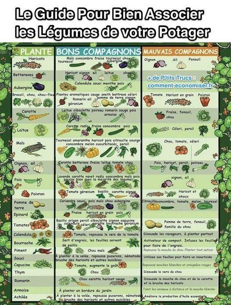 Le Information Pratique Pour Bien Associer les Légumes de votre Potager.