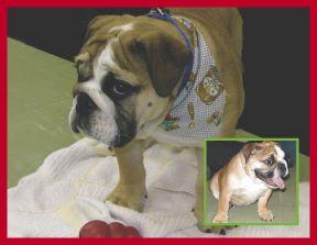 Understanding Canine Behavior Recognizing & How to Handle Dog Behavior
