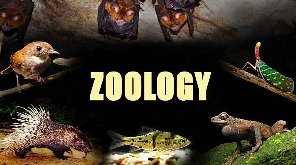 M Sc Zoology Course In 2020 Zoology Msc College Fun